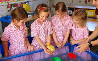 Busy Summer Term for Reception